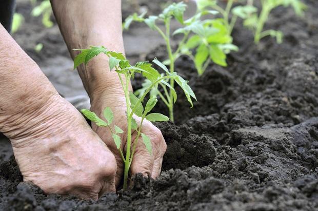Coltivare o meno su terreni soggetti ad esproprio?