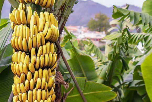 Banane (niente ironia!)