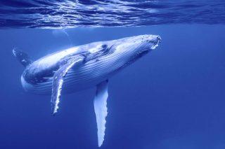 #iostoconmoby: il Museo Garda sta con le balene