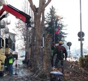 Ancora polemiche sugli alberi di Corso Nigra