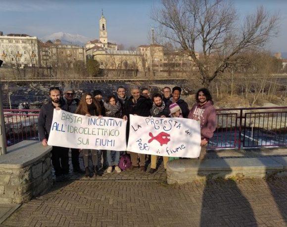 La protesta dei pesci di fiume 100: sit-in e flash mob su fiumi e torrenti, anche a Ivrea