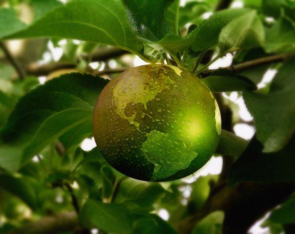 La transizione ecologica: chi la desidera e chi no?